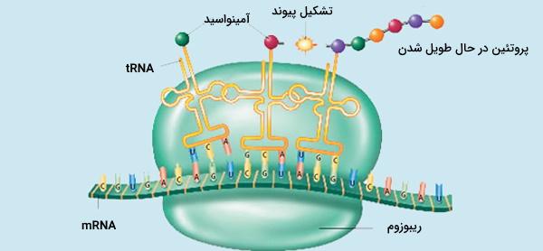 تولید پروتئین