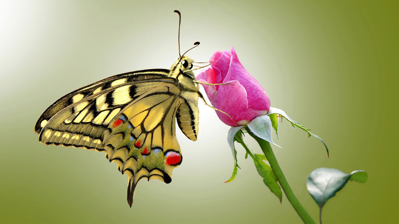 پروانه ها در زیست شناسی | هر آنچه باید بدانید