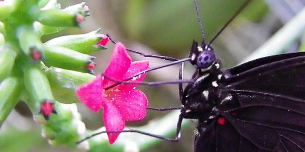 غذای پروانه