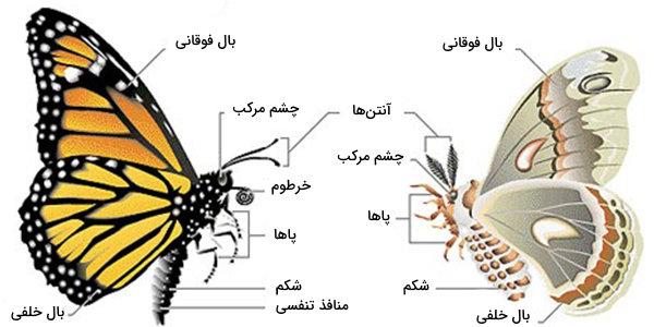 پروانه و شب پره