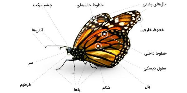 ساختار پروانه