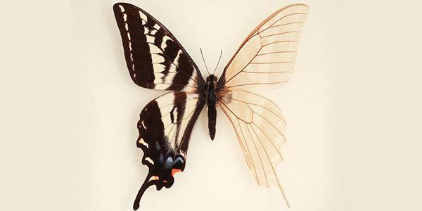 اسکلت بدن پروانه ها