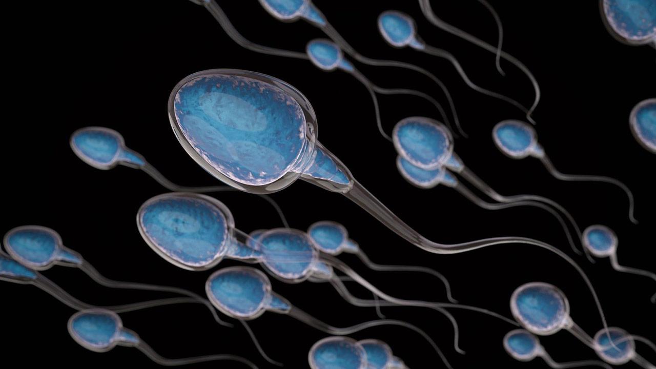 اسپرم چیست ؟ | ساختار، عملکرد، مراحل تولید و ناهنجاری ها