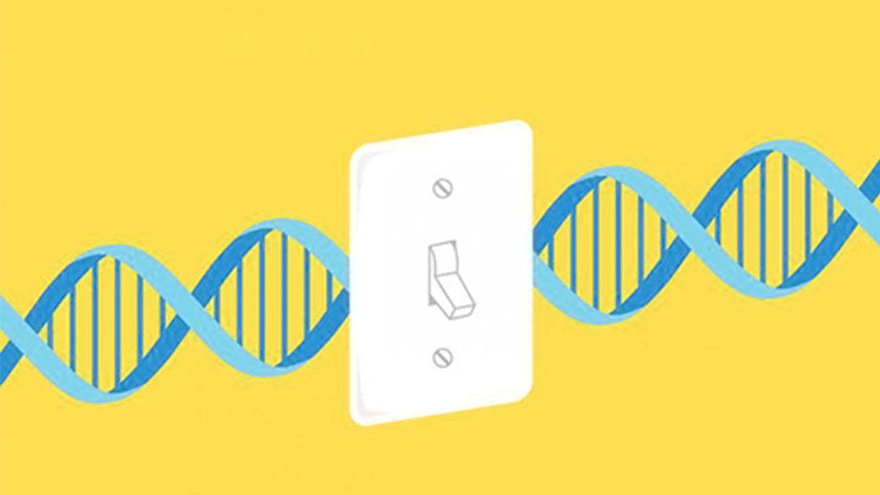 اپی ژنتیک چیست ؟ — به زبان ساده