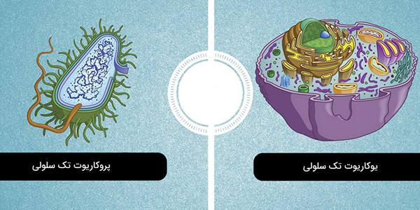 تک سلولی چیست