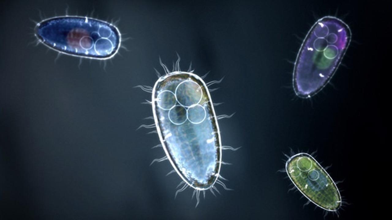 تک سلولی ها چه هستند؟ | آنچه باید بدانید به زبان ساده