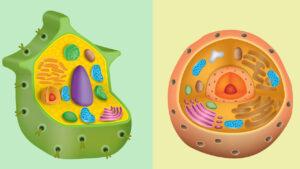 تفاوت سلول گیاهی و سلول جانوری چیست؟   به زبان ساده