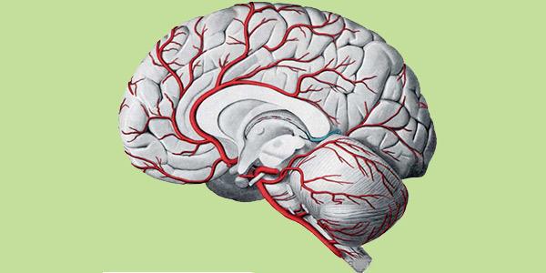 خونرسانی به مخ