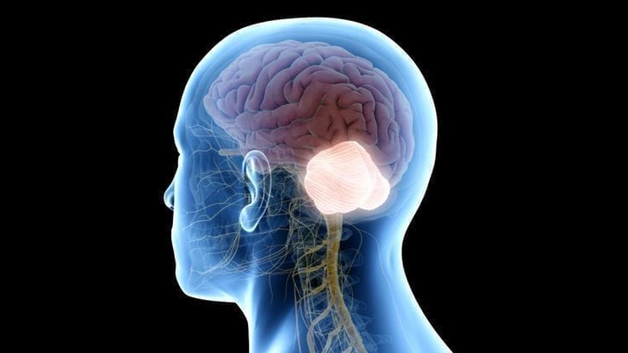 مخچه چیست؟ | ساختار، آناتومی و عملکرد — به زبان ساده
