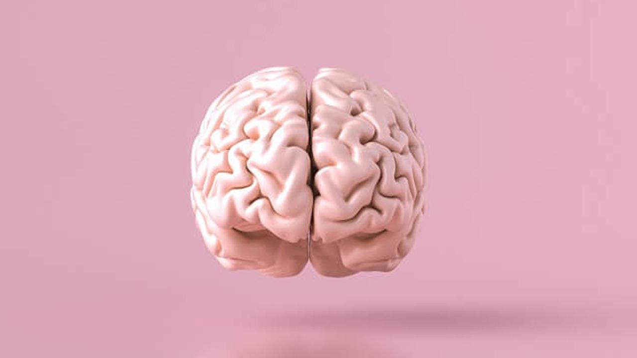 مخ چیست ؟ | ساختار، وظایف و عملکرد — به زبان ساده