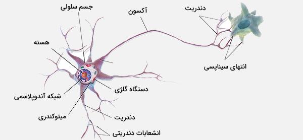 سلول عصبی