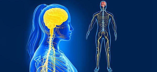عصب های بدن