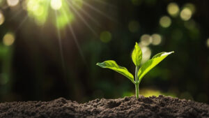 فیزیولوژی گیاهی چیست؟ | تکنیک ها، بیوشیمی و هورون های گیاهی — آنچه باید بدانید