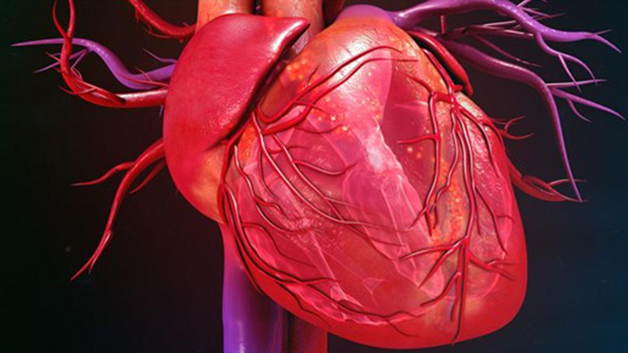 چرخه کار قلب چگونه است؟ — به زبان ساده