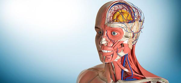 آناتومی چیست