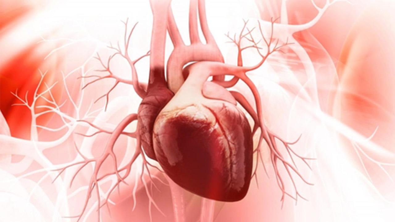 قلب چگونه کار می کند؟ — به زبان ساده