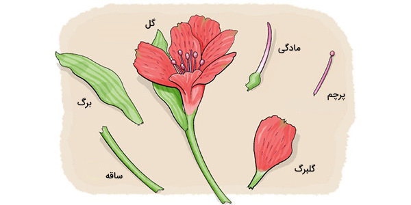 گیاه گل دار
