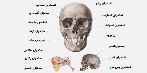 استخوان سر