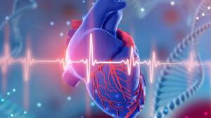 قلب چیست ؟ | وظیفه، ساختار، جایگاه و عملکرد — آنچه باید بدانید