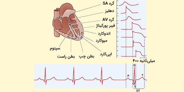 هدایت الکتریکی در قلب