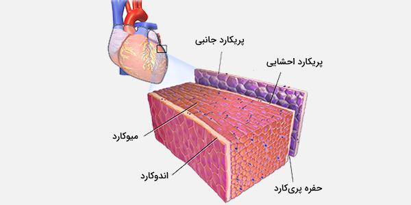 دیواره قلب