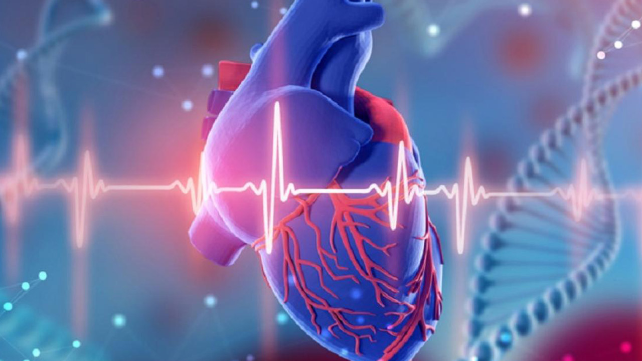 قلب چیست ؟   وظیفه، ساختار و عملکرد — آنچه باید بدانید