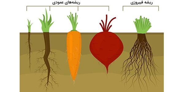 ریشه گیاه