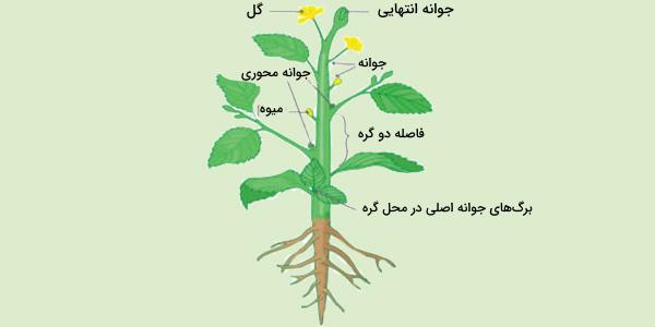 گیاه چیست
