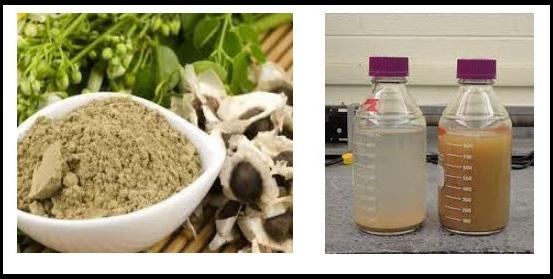 تصفیه آب با مورینگا