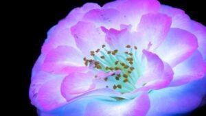 گل های فرابنفش — ویدیوی علمی