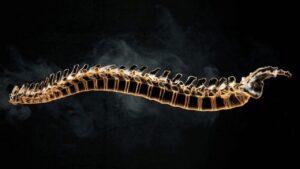 ستون فقرات چیست ؟ — آناتومی ستون فقرات انسان — به زبان ساده