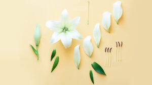 قسمت های گل — اجزا و ساختمان گل — به زبان ساده