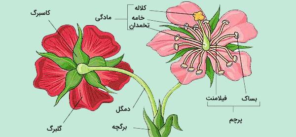 عکس قسمتهای مختلف گل