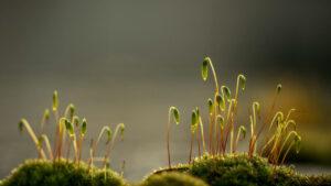 خزه چیست ؟ — خصوصیات، زیستگاه و انواع گیاه خزه — آنچه باید بدانید