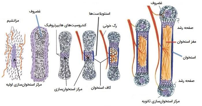 مفصل سازی