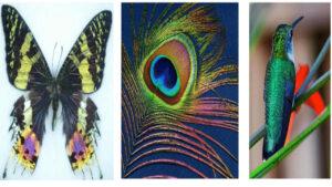 رنگ آمیزی ساختاری — ویدیوی علمی