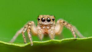 عنکبوتیان چیست ؟ | تعریف، خصوصیات، گروه ها و انواع — دانستنی های عنکبوت