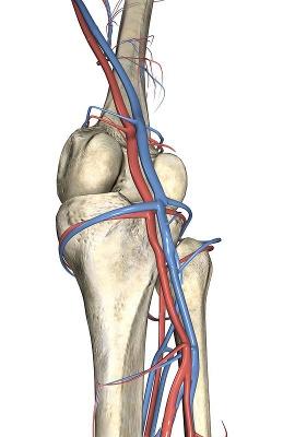خونرسانی به مفصل