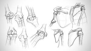 مفصل چیست ؟ — انواع مفاصل، آسیب ها و درمان آنها — هر آنچه باید بدانید