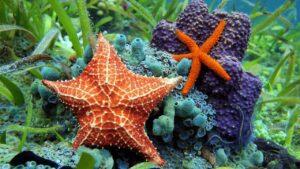 ستاره دریایی چیست ؟ — آناتومی، تغذیه، تولید مثل و دیگر دانستنی ها