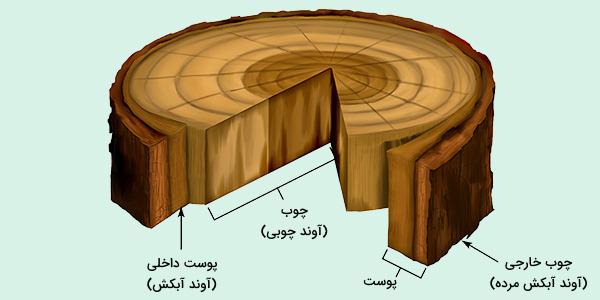 حلقه رشد درختان