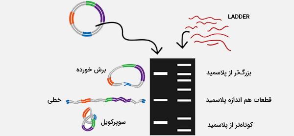 الکتروفورز DNA