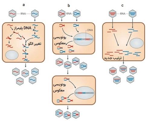 نوترکیبی در ویروسهای RNA دار