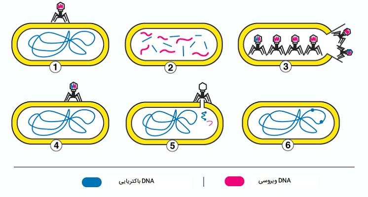 ترانسداکشن باکتریها