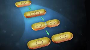 تولید مثل باکتری ها چگونه است؟ — به زبان ساده