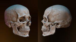 جمجمه انسان چیست و چند استخوان دارد؟ — آناتومی و عکس — به زبان ساده