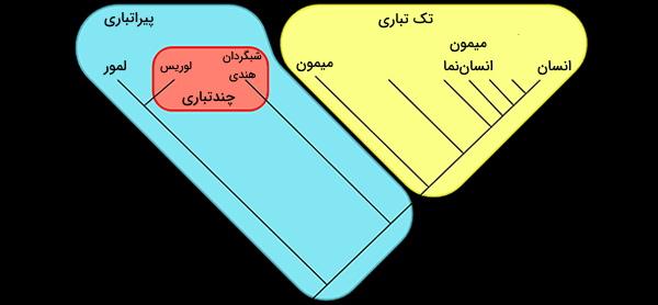 تک تباری