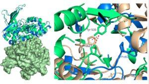 داکینگ مولکولی چیست ؟ — کاربردها، روش ها و نرم افزارها — به زبان ساده 