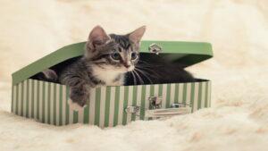 گربه شرودینگر چیست ؟ — به زبان ساده