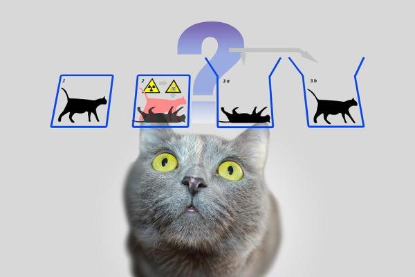 آزمایش گربه شرودینگر